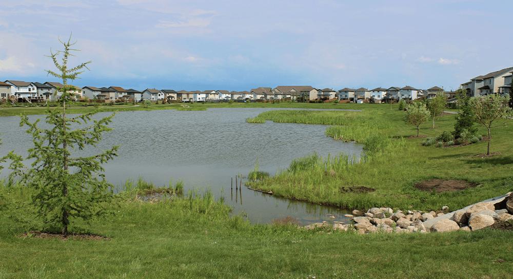 Springate Community Image
