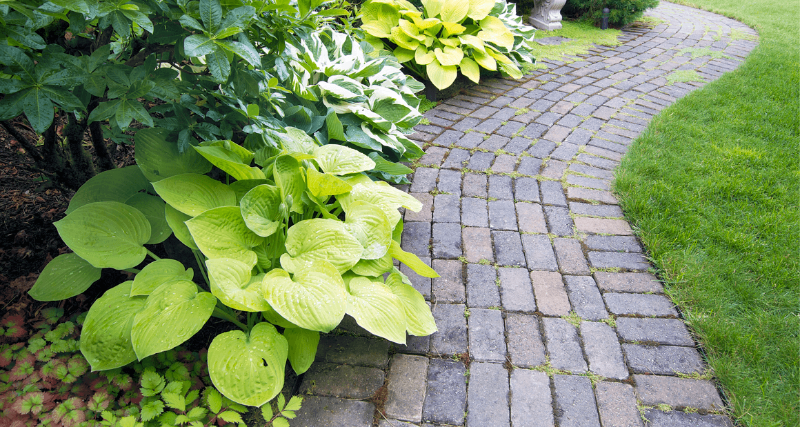 What You Need to Know About Landscaping When Buying a New Home Path Image